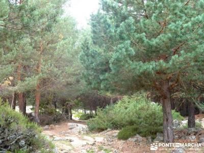Puertos del Reventón y Calderuelas;equipo de senderismo bosque madrid subida a la bola del mundo